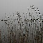 Lakes: mist by Jonesyinc