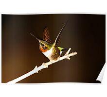 HUMMINGBIRD IN SPOTLIGHT Poster