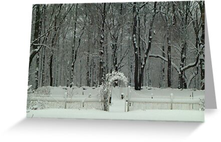 Winter Wonderland by Connie Thomase