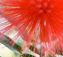 Powderpuff Flower by Lucy Hollis