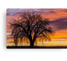 Cotton Wood Sunrise Canvas Print