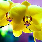 Orchids with interesting background colors. by ronsphotos