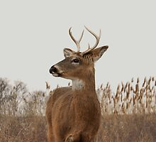 Beautiful Deer Profile by RaymondJames