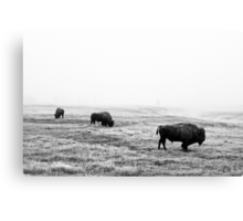Frosty Bison - Yellowstone National Park Canvas Print