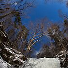 Wintery Beauty of Ricketts Glen by Mark Van Scyoc