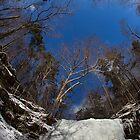 Wintery Beauty of Ricketts Glen by Mark Van Scyoc