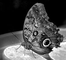 I like citrus fruits. (Butterfly) by Zaraar  Zahid Soorty