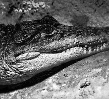 The Rigid Anticipation Of A Croc by Zaraar  Zahid Soorty