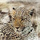 Wild Cat. by Lyn Darlington