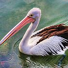 Pelican circle by Chris Brunton