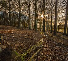 Sun Through the Trees by Phil Tinkler