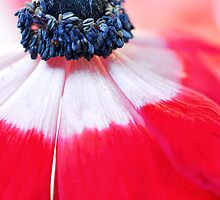 Red Anemone....(II) by Bob Daalder