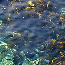 Colours of Water by Simon Gottschalk