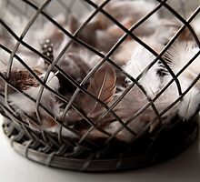 Feathers in a Basket by brijo