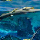 sharks by sanngat
