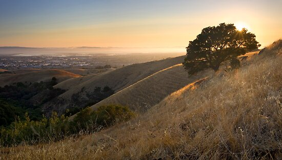 California East Bay Hills in Summer by Matt Tilghman