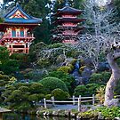 Japanese Tea Garden - Golden Gate Park by Yukondick