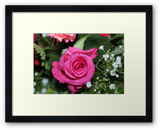 Pink rose adds colour  by Perggals© - Stacey Turner