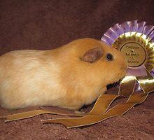 Honey - Best Pet Guinea Pig by Michaela1991