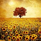 Lone tree and sunflowers field by VivianaPhotoArt