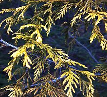 """Spruce """"Out of the Blue"""" by LubaE"""