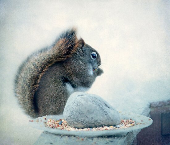 Little Squirrel's Breakfast ~ by Renee Blake