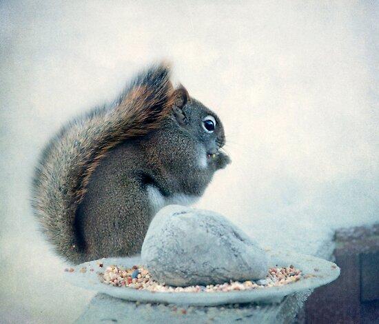 Little Squirrel's Breakfast ~ by Renee Blake
