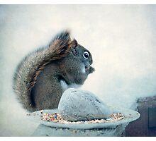 Little Squirrel's Breakfast ~ Photographic Print