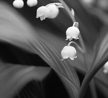 Lily of the Valley by Hannah Welbourn