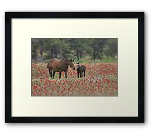 Horses in a field of Wildflowers in the Texas Hill Country Framed Print