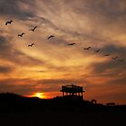 Sunset Flight by hperrydesign