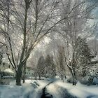 Brookline after Blizzard Nemo by LudaNayvelt