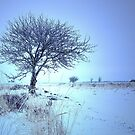 My favorite Tree by ienemien