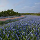 My Blue Heaven - Bluebonnets near San Saba, Texas by RobGreebonPhoto