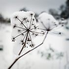 snow-seed 1 by Colin Powell