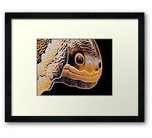 Butterfly or Snake Head Framed Print