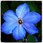 Blue flower close up by kbenecke75