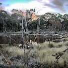 The Torquay Wetlands (2) by Larry Lingard-Davis