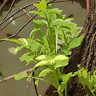 Plant Stem Growing on Tree by photoartful