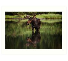 Reflecting Bull - Many Glacier Art Print