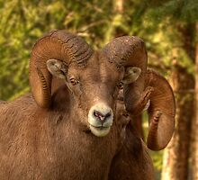 Ram Glare by JamesA1