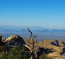 View of Tucson, distant mountain ranges and desert from Mount Lemmon, Arizona by Claudio Del Luongo