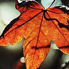 Translucent Leaf by Darrick Kuykendall