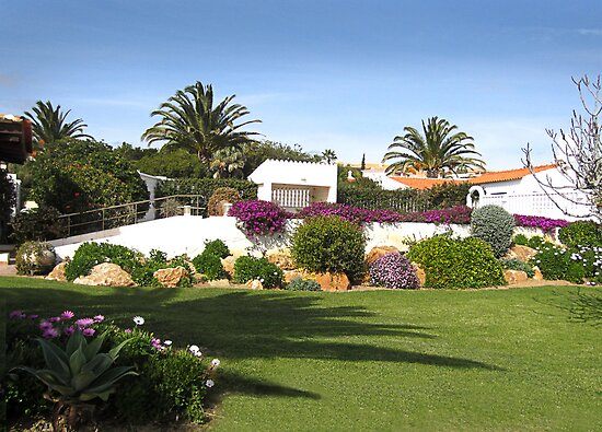 An Algarve winter garden. by Paul Pasco