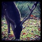 Knutsford Stag by Jonesyinc