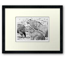 A capybara group (Hydrochoerus hydrochaeris) Framed Print