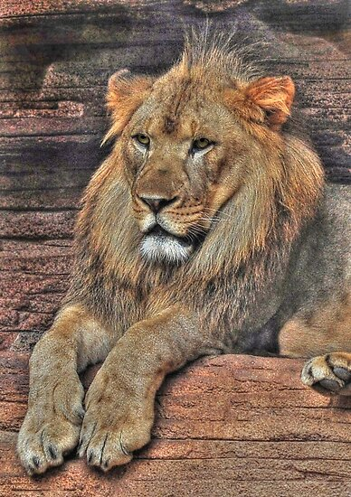 I Am KING by Kathy Baccari