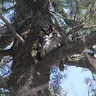 Great Horned Owl by Rich Fletcher