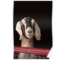 Hey Goat ! Poster