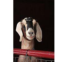Hey Goat ! Photographic Print